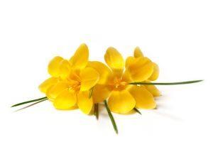 Kwiaty dla męża